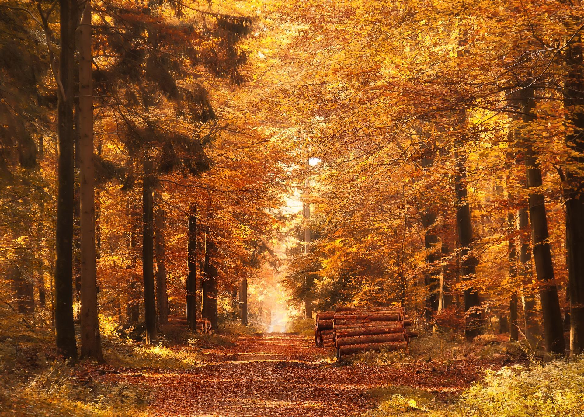 la foret en automne